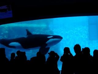 2010-11-21 水族館 007 (800x600).jpg