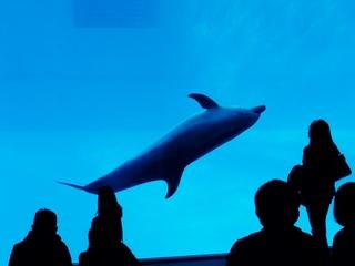 2010-11-21 水族館 029 (800x600).jpg