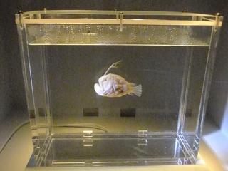 2010-11-21 水族館 132 (800x600).jpg